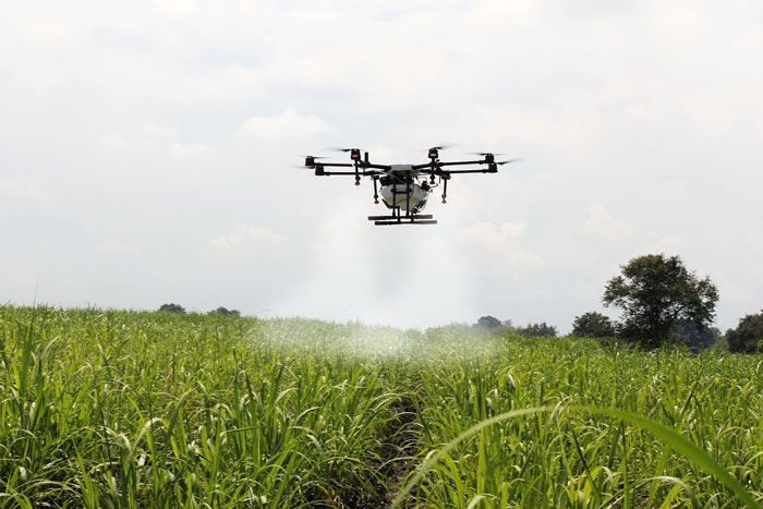 Agricultural crop spraying drone flying over sugarcane crop