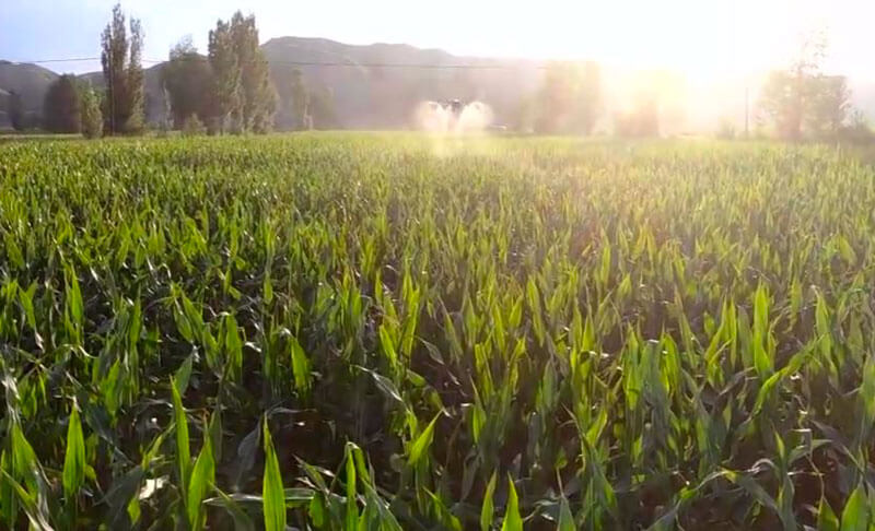 Drone Crop Sprayers and Commercial Drones For Sale | Get a Quote